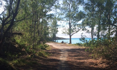 Meander pathways that wind through forest and beach