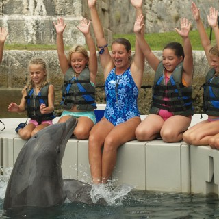 Dolphin Quest Kids Encounter Program in Bermuda