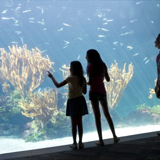 The Bermuda Aquarium