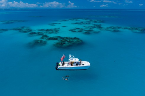Snorkelling expeditions