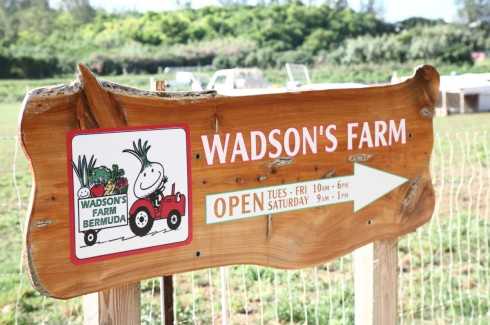 Wadson Farms
