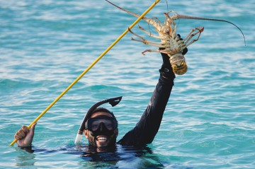 Spiny Lobster fishing in Bermuda