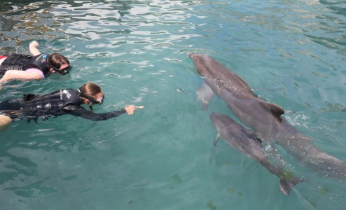Discover Baby Dolphins